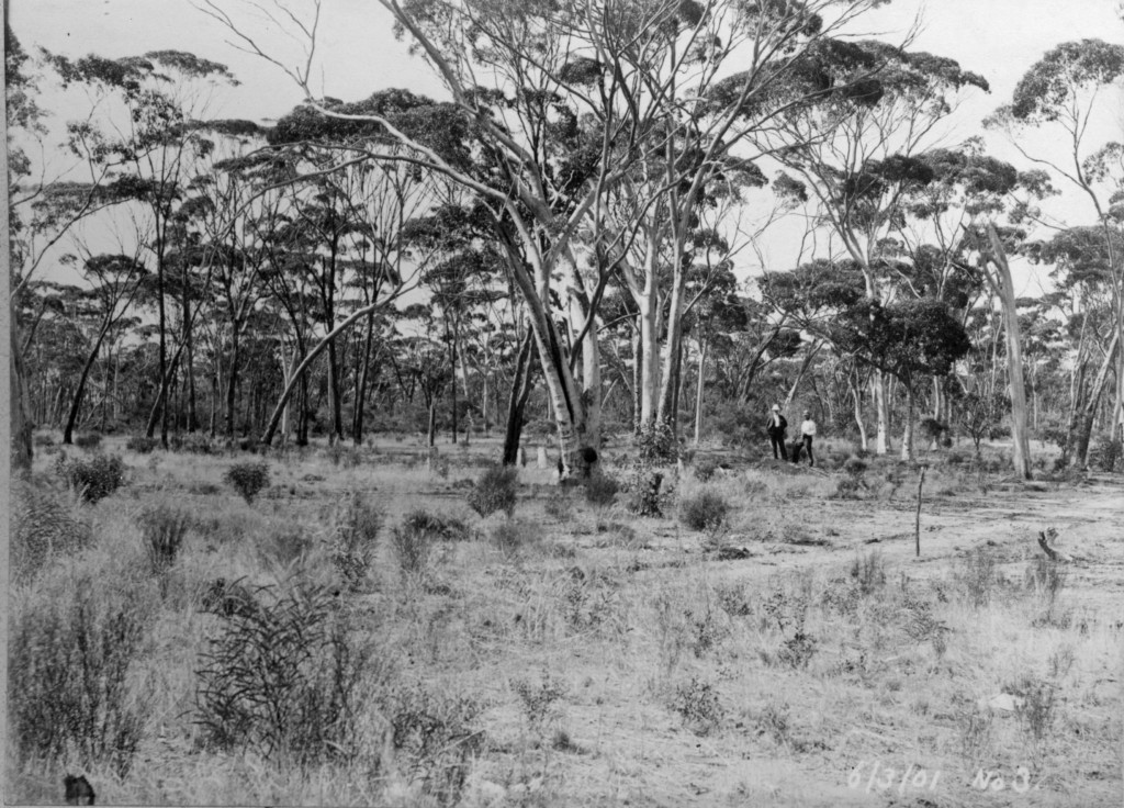 The chosen site of the No 3 Pump Station in Cunderdin, c. 1901.