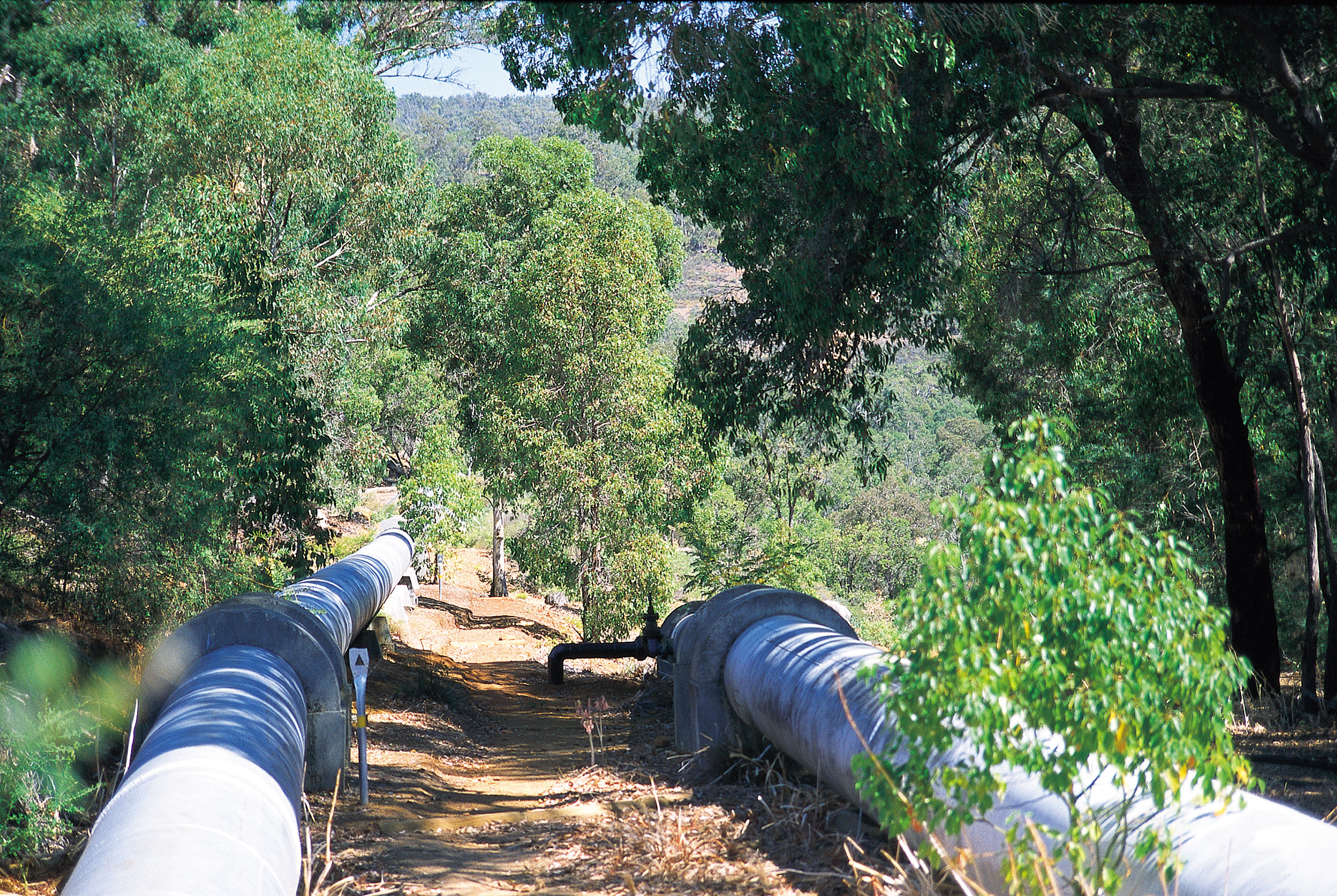 A section of pipe running through forestland.