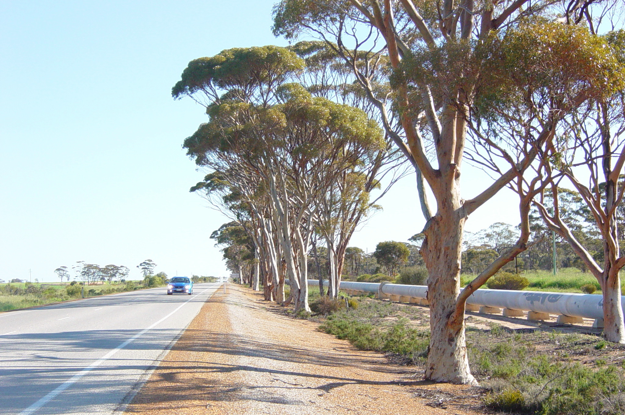 Driving along the pipeline near Southern Cross.